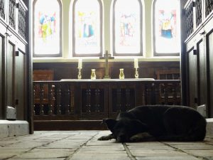 Blessing of the Animals - Dog in Church